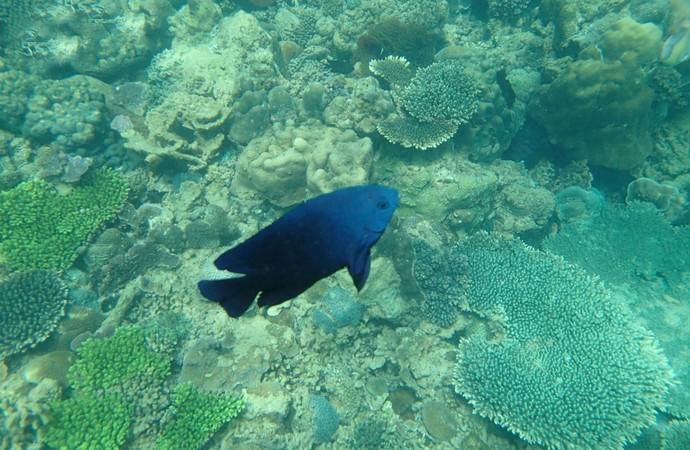 壁纸 海底 海底世界 海洋馆 水族馆 690_450