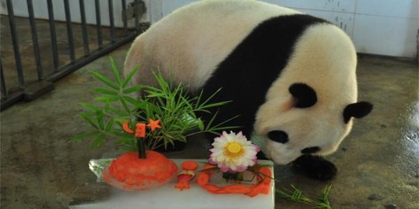 大熊猫,你为什么只穿黑白色的衣服? 大熊猫,你练了什么技能能成为国宝? 大熊猫,你的便便为什么能做纸? 大熊猫,你保护九寨沟的时候为什么不叫上我? 大熊猫……因为喜欢才会想要知道